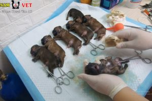 7 Cutest Baby Bull Puppies were saved – God bless these cute puppies