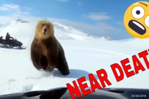 NEAR DEATH ANIMAL ENCOUNTERS COMPILATION captured by GoPro