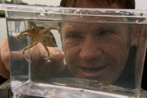 The Venomous Blue Ringed Octopus | Deadly 60 | BBC