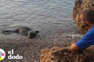 2 focas bebés a punto de morir son rescatadas | El Dodo