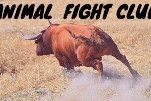 Animal Fight Club...Wildlife Series Ep. 2