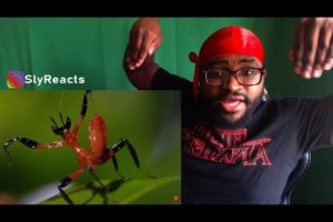 REACTION   10 CRAZIEST ANIMAL FIGHTS CAUGHT ON CAMERA