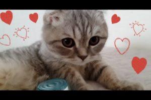 Cutest Kitten Ever / 귀여운 새끼고양이
