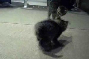 Cutest Kitten Going Crazy!