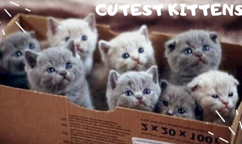 Cutest Kittens Compilation 2020   Funny and Best Kitten Videos EVER   Kittens watch television!