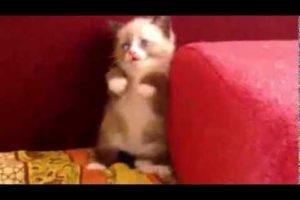 Cutest kitten Ever scared :(