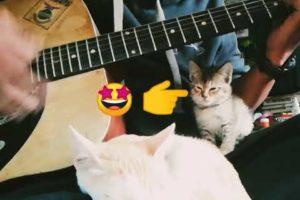 Cutest kitten listening guitar and falling asleep