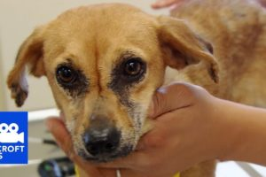 DOCS: Chase | Animal Cops Houston