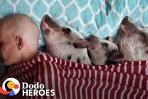 Guy Fills His Condo With Rescued Farm Animals | The Dodo Heroes