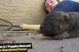 Injured mother dog and seven puppies rescued under an abandoned house | Animal Rescue 2020