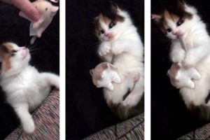Kittens Playing with Mouse Toys - Cutest Kitten Ever