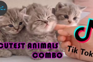 Tik Tok 🥰 Cutest Animals - Super Cute Kitten Baby Dog Ducky Hamster Fish