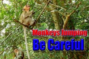 WildLife Animals - All About Monkeys Playing Amazing! Key of Secret #04