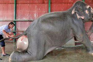 ये जानवर कैसे पैदा होते है? देखकर हैरान रह जायेगे | Most AMAZING Births In The Animal Kingdom!