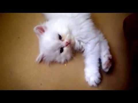 Cutest Kitten in the World!!