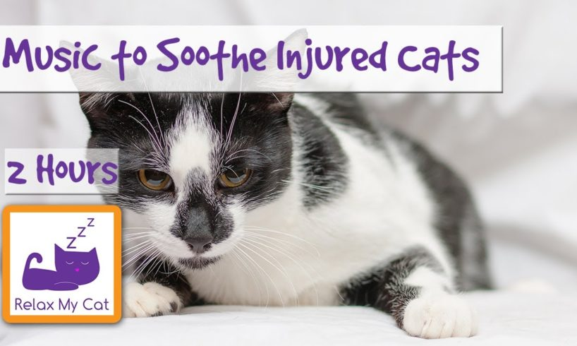 2 Hours of Soothing Music for Injured or Poorly Cats - Calm Down Your Cat with Music