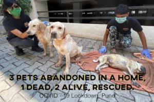 Abandoned Pet Dogs Rescued from a Home during COVID-19|  Lockdown in Pune | Animal Rescue, India