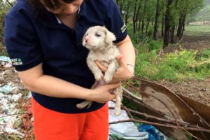 China abandoned puppy was rescued in the rain - dog rescue team