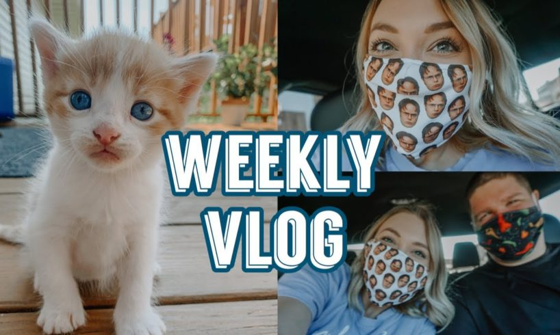 DWIGHT SHRUTE MASK, HYPE DROP HAUL, & THE CUTEST KITTENS