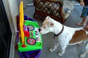 Dog Attempts to PLAY Piano!!!