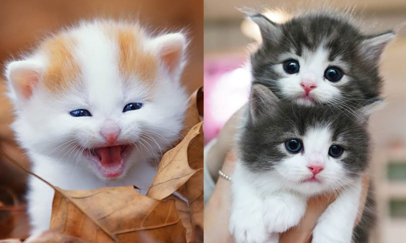 Kittens SOO Cute! Aww Cute Baby Cats Videos Compilation 😍 Cutest kittens Moments