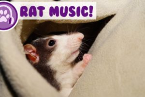 Music for Rats! Calm and Relax Your Rat and Stop Anxiety!