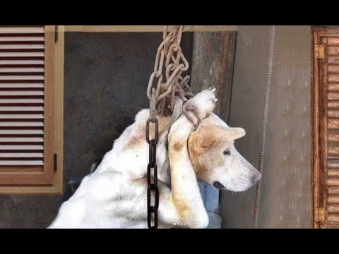 Psycho Man ! Puppy Rescued from Dоg Mеаt Trаdе!! ! HAPPY ENDING ANIMAL RESCUE