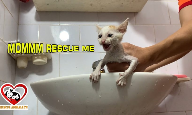 The Kitten MEOWING LOUDLY with the First Bath After Rescued, Rescue Animals TN Center