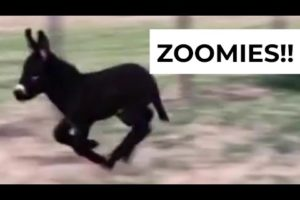 Zoomies! | The Cutest Rescued Animals Compilation