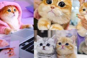 awesome cutest kittens in the world---cutest kittens ever