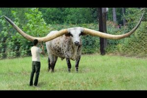 10 Animals With The Biggest Horns In The World