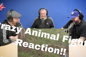 14 CRAZIEST Animal Fights Caught On Camera REACTION!! | OFFICE BLOKES REACT!!