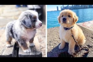 Cute baby animals Videos Compilation cutest moment of the animals - 🐶 Cutest Puppies #8 🐶