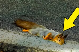 A Squirrel Rescued From The Side Of The Road Is Now Part Of The Family