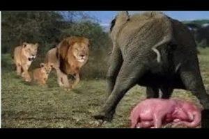 Amazing Wild Animals Attacks -Wild Animal Fights Caught On Camera - SAPIENTIZACION