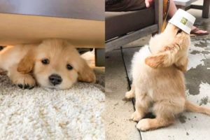 Cute Puppies Doing Funny Things 2021 #5 Cutest Dogs