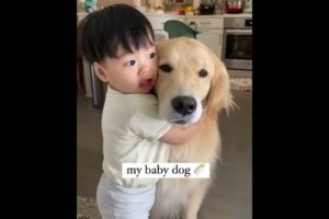 Cutest dogs video compilation  ever ♥️