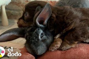 Este es el conejito más pequeño del mundo | Pequeño y Valiente | El Dodo