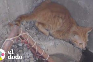 Este gatito quedó atrapado debajo de todo ese concreto | El Dodo
