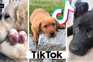 Funny Dogs of TikTok ~ Cutest Puppies Compilation ~ The Dog Squad