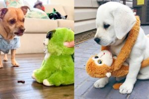 Funny and Cute Dog Reaction to Playing Toy | Aww Animals