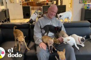 Hombre ama rescatar Chihuahuas abandonados I El Dodo