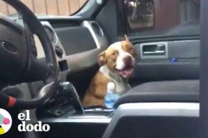 Pareja encuentra a un perro callejero en su camioneta | El Dodo