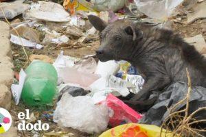 Perrito callejero que parecía piedra cambia su vida completamente | El Dodo