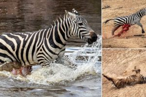 TOP 5 CROCODILE DEFEAT OTHER ANIMALS IN THE RIVER