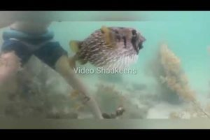 unbelievable animal rescue videos | Animal Rescue by people | Random act of kindness