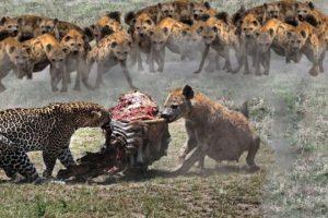 Кто Сильнее! Леопард против Гиены, Тигра, Орла, Льва, Медоеда…