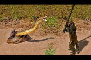 15 CRAZIEST ANIMAL FIGHTS CAUGHT ON CAMERA