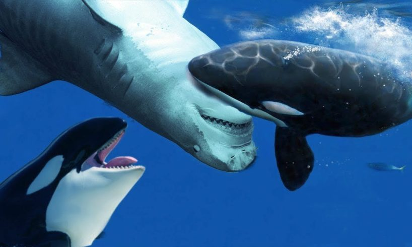 15 Times Sea Animals Messed with the Wrong Opponent