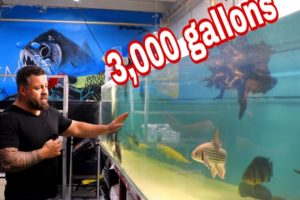 3000 Gallon acrylic tank looks brand new!! Lets help Juan with his dog rescue